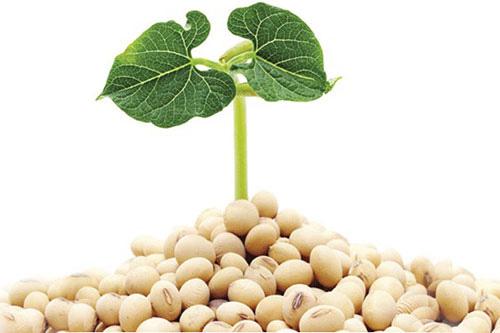 cách làm đẹp da với tinh chất mầm đậu nành