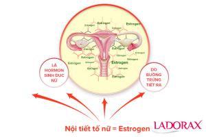 Cách bổ sung nội tiết tố nữ an toàn thiên nhiên
