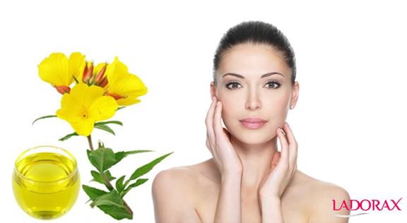Tinh dầu Hoa Anh Thảo (EPO) là gì? Tinh dầu hoa anh thảo có tốt không? Tác dụng của tinh dầu hoa anh thảo là gì?